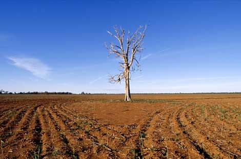 Dead crop
